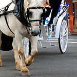 horse-carriage-in-nashville-susanne-van-hulst